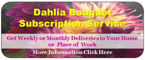 DahliaSubscritionService