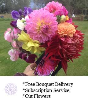 Dahlia and Sweet Pea Bouquet