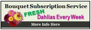 DahliaSubsciptWidget