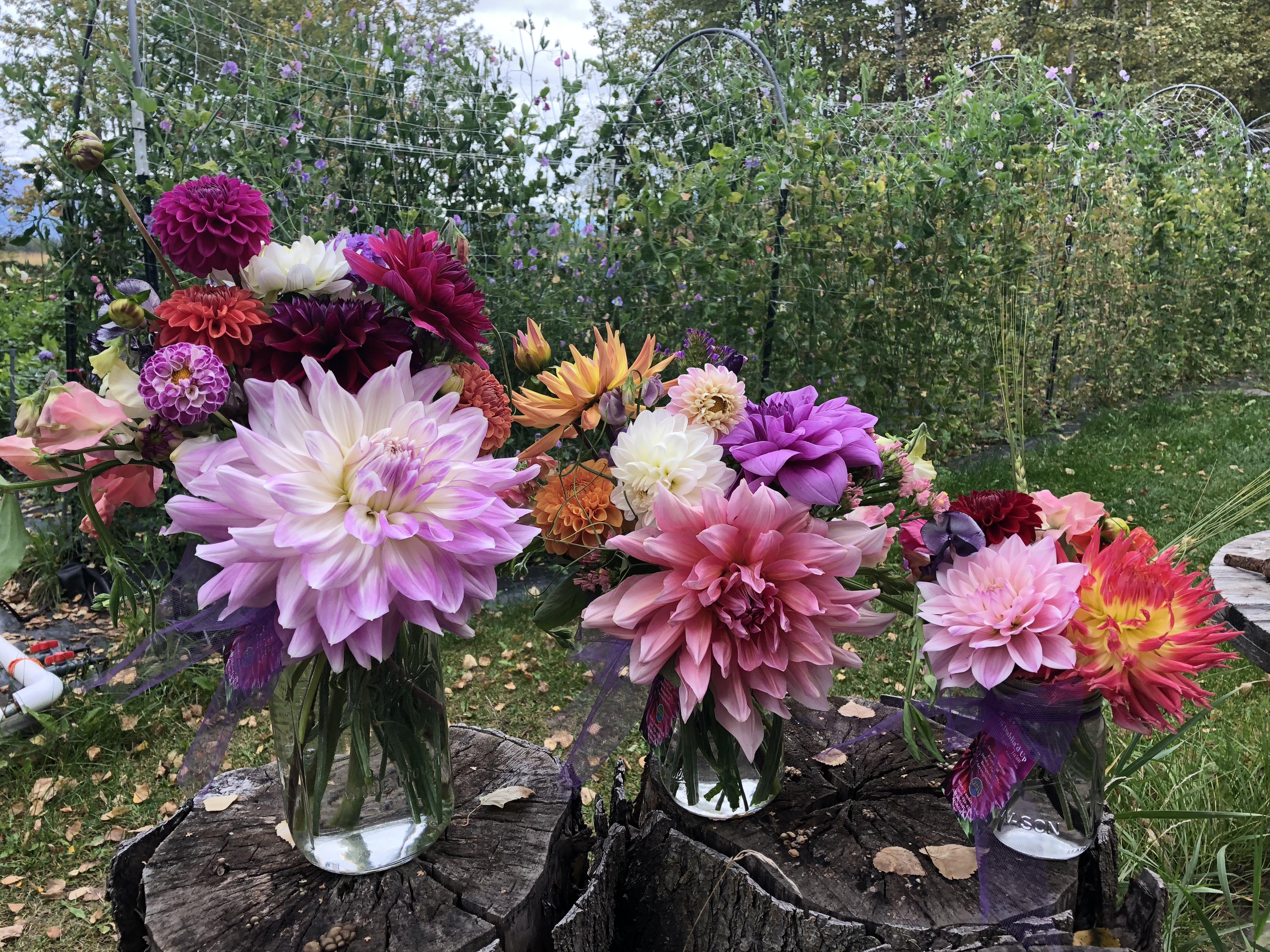 Order Flowers Alaska Grown Seasonal Flowers Alaska